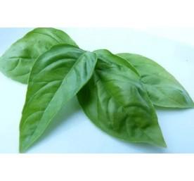 Aromatique basilic en pot de 10,5cm