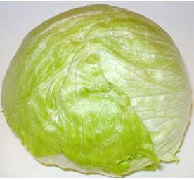 Plants de laitues iceberg glassica en barquette de 12