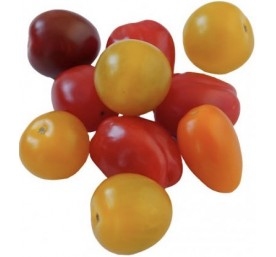 Plant tomates variees en motte de 8 plants