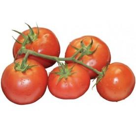 Plant tomates saint pierre en barquette de 6 plants
