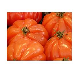 Plants de tomates super marmande en barquette de 6