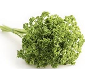 Plant persil simple bio en pot de 1litres