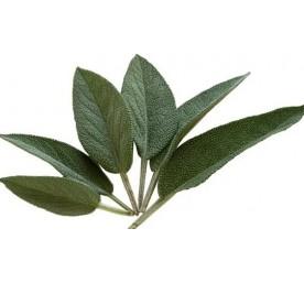 Aromatique sauge officinale en pot de 13cm