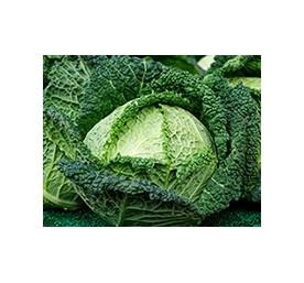 Plants de choux milan jaspis f1 en barquette de 6