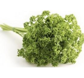 Plant persil frise bio en pot de 1litres