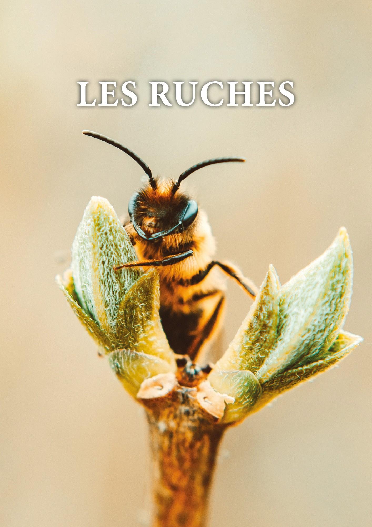 Comment fabriquer une ruche pour les abeilles et pourquoi ?