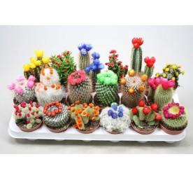 Cactus melange + fleur artificielle en pot de 8,5cm