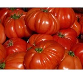 Tomates cdiamètreur de bdiamètreuf en barquette de 6...