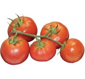 Plant tomates grappes pepite f1 en barquette de 6 godets